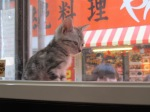 A pet store in Shibuya, with lots of huggable looking little cats and dogs